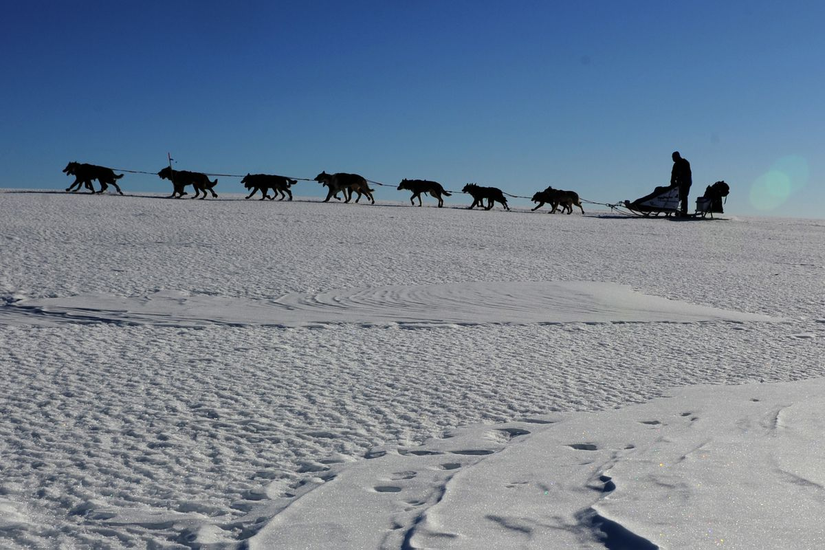 A musher drives a team along the Yukon River after leaving the Anvik checkpoint during the 2011 Iditarod Trail Sled Dog Race March 11, 2011. (Bob Hallinen / ADN)