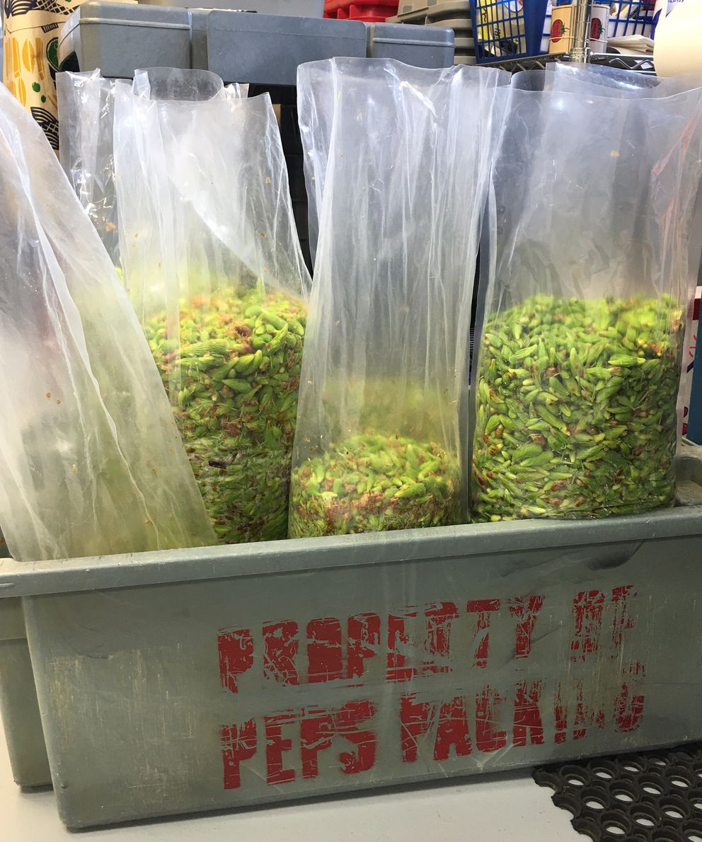 Sitka spruce tips cool in a freezer at Pep's Packing in Gustavus on Thursday. The tips are cleaned, frozen, and vacuum sealed before being shipped to restaurants and breweries in Southeast Alaska. (Pep Scott)