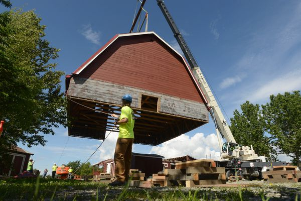 A crane lifts the roof off of the Colony barn visitor center at the Musk Ox Farm as Xavier Lechleitner with H. Watt and Scott General Contractors helps guide it to its resting place in Palmer on Thursday, June 6, 2019. The Musk Ox Farm is building a new visitor center which will retain the original colony barn roof from the original Lentz family barn. The Lentz's were part of the original Matanuska Valley Colonists from 1935. The visitor center is scheduled to be completed in the fall of 2019. (Photo by Bob Hallinen)