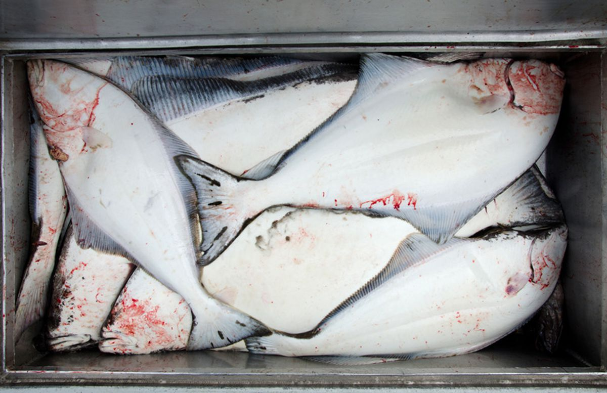 Alaska charters struggle to adapt to new rules on halibut for Anchorage fishing charters