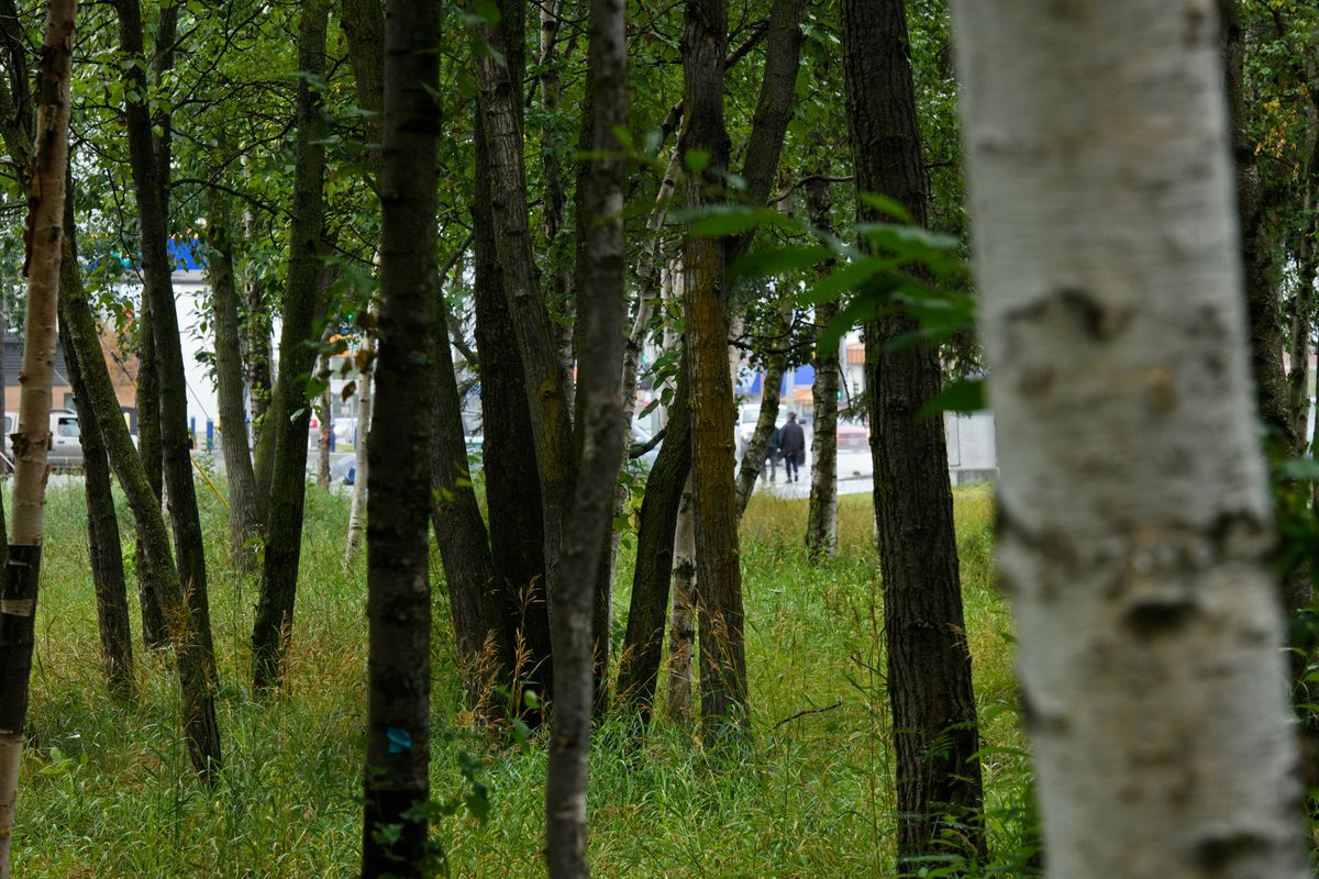 Joyce Fredericks, 64, was found dead in the woods along the New Seward Highway near Northern Lights Boulevard on June 26, 2020. Photographed on August 24, 2020. (Marc Lester / ADN)
