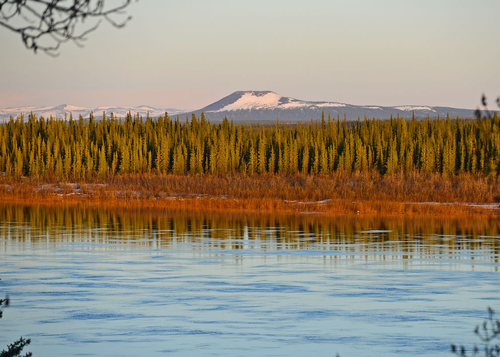 Low sunshine strikes trees near the banks of the Kobuk River. (Photo by Seth Kantner)