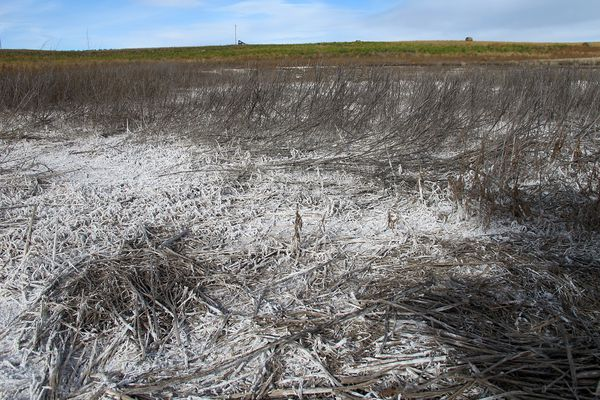 This October 2014 photo shows salty residue from spilled oilfield wastewater on cropland in McKenzie County, N.D. Experts say it can take years to restore brine-damaged land to health, a process that requires removing the salts and adding nutrients to rebuild soil structure so plants can grow once more.