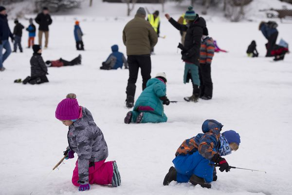 "Hundreds of Anchorage students tried their luck jigging below the ice on Jewel Lake Tuesday. It was the first of several days of an ice fishing event for kids hosted by the Alaska Department of Fish and Game, an event it has been hosting for 20 years. Fish and Game stocked the lake with a total of 6,000 king salmon ahead of this week's events. Rainbow trout and blackfish can also be caught in the lake. Fish and Game biologist Brittany Blain-Roth said it was fun to see kids react to ice fishing by jumping up and down and yelling ""fish on."" ""They're pretty excited,"" Blain Roth said. ""Some kids have never caught a fish before."" Students will fish at Jewel Lake each day through Friday. On Saturday, February 9, the public of all ages and experience levels are invited to Fish and Game's community fishing day at Jewel Lake from 10 a.m. to 2 p.m. Ice fishing holes will be pre-drilled and fishing equipment will be available to borrow. Alaska residents 18 years of age and older are required to have a sport fishing license, which can be purchased at the event. (Marc Lester / ADN)"