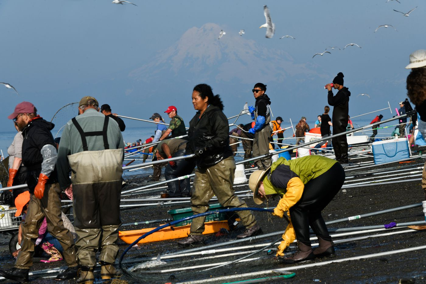 Dipnetting poles line the south shore of the Kenai River's mouth on a busy morning. Several hundred Alaskans gathered at the mouth of the Kenai River to dipnet for sockeye salmon on July 18, 2019. (Marc Lester / ADN)