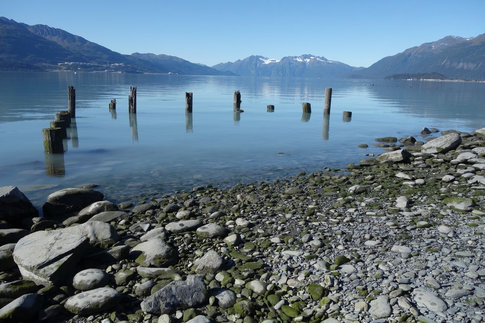 Pilings from a wharf at the former town of Valdez that waves destroyed after the Great Alaska Earthquake of March 1964. (Photo by Ned Rozell)