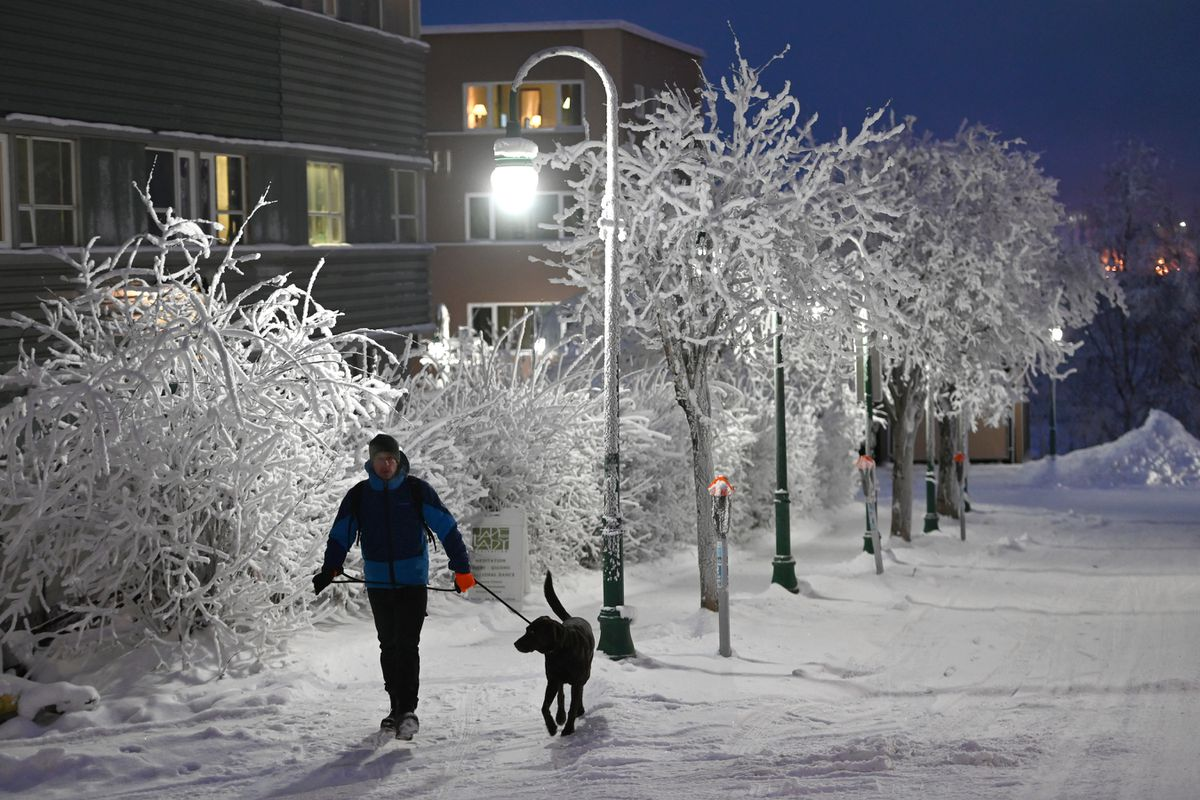 The white light from an LED street lamp brightens E Street as Andrew Hartsig walks with 5-year-old chocolate Labrador retriever Agnes on Monday. The conversion from orange-glowing high-pressure sodium bulbs throughout Anchorage was completed in 2017, but a recent audit found the utilities were charging the city a fee calculated for the less energy-efficient sodium bulbs. (Bill Roth / ADN)