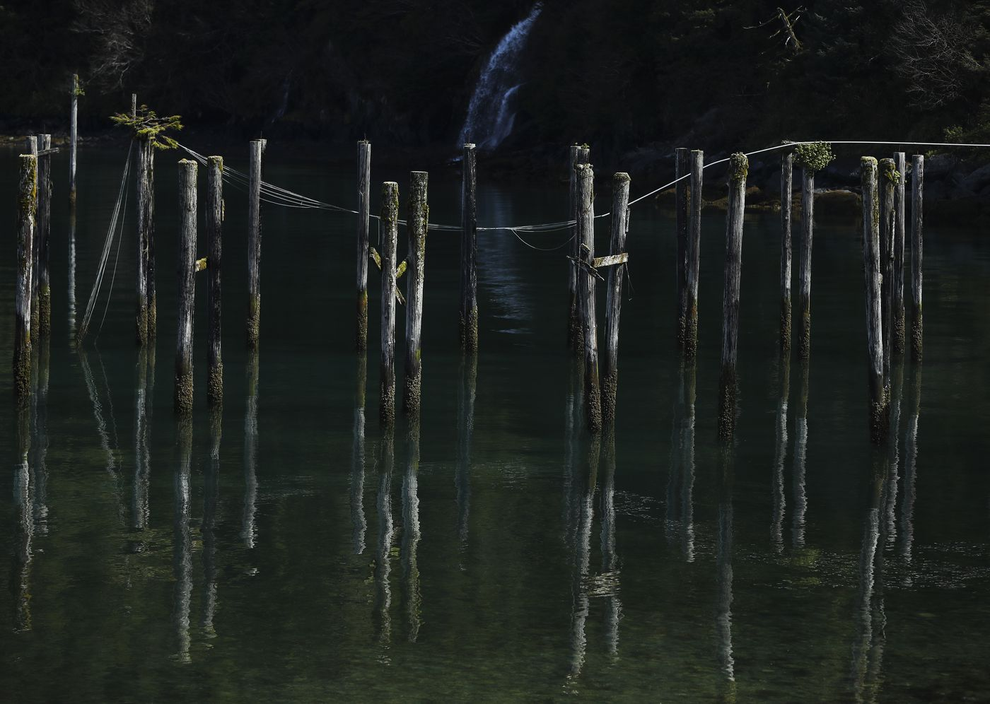 Moss-covered pilings rest in shallow water on the shore of Orca Inlet in Cordova on Saturday, May 22, 2021. (Emily Mesner / ADN)