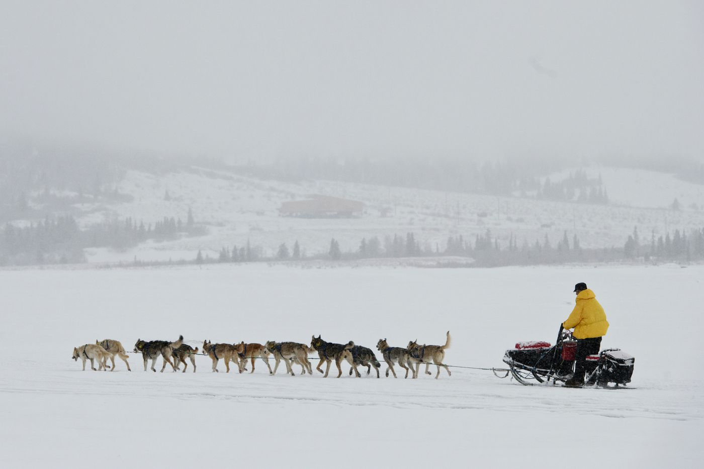 Musher Linwood Fiedler leaves Unalakleet during the 2019 Iditarod. (Marc Lester / ADN)