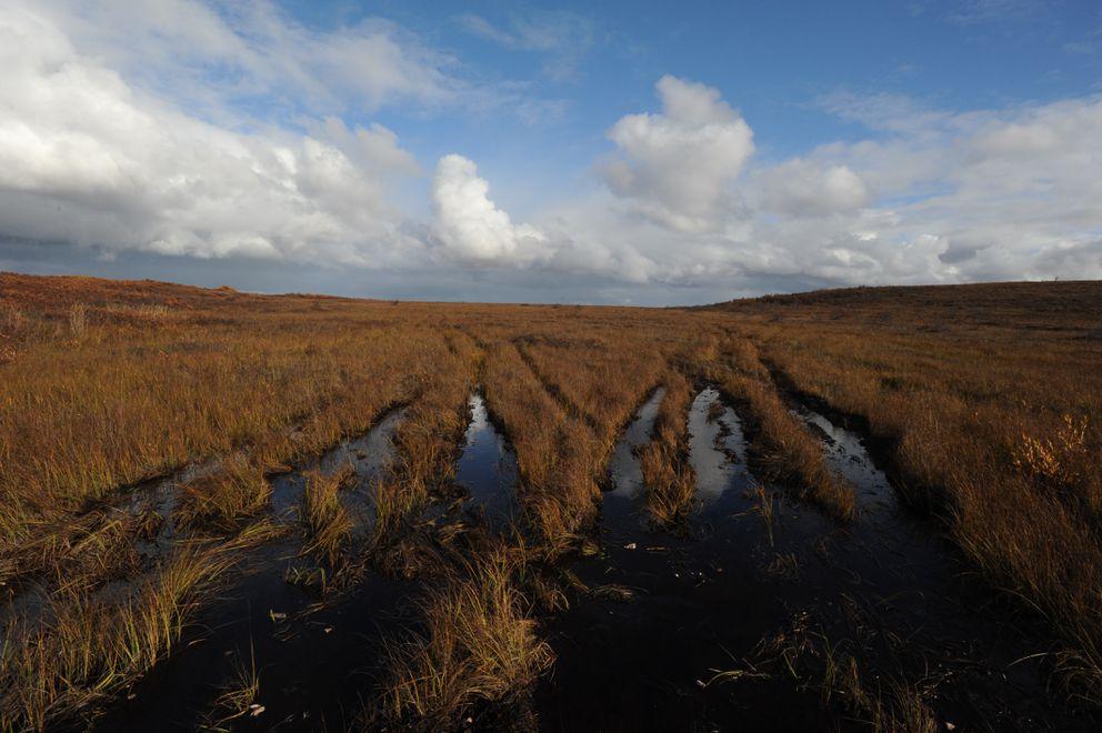 ATV tracks lead across tundra towards the area where the body of Ashley Johnson-Barr was found outside Kotzebue. (Bill Roth / ADN)