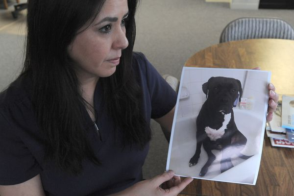 Rosemary Tower holds a photograph of her dog Zeus. Zeus has been missing since he took off after the earthquake, Nov. 30, 2018. She and husband Sean have posted signs, talked to neighbors, worked social media and still have no sightings of their dog. Photographed Dec. 6, 2018. (Anne Raup / ADN)