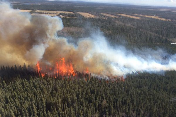 The North Eielson Fire burns through a stand of black spruce trees on Friday, May 11, 2018, near Delta Junction. The fire burned approximately 250 acres of farm fields and timber before being brought under control. (La'ona DeWilde/Alaska Division of Forestry)
