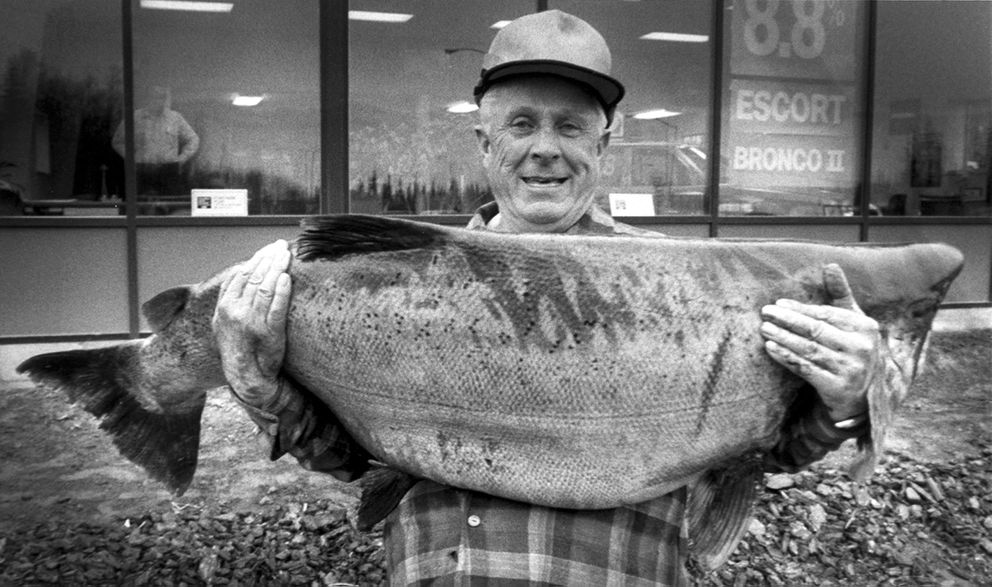 Les Anderson's 1985 king salmon weighed in at 97 pounds, 4 ounces, a rod-and-reel world record. Anderson threw his big fish in his truck and didn't weigh it for several hours. Many believe it would have topped 100 pounds. (Ronnie Chappell / ADN archive 1985)
