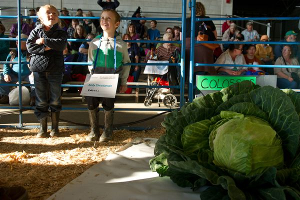 Daisy and Andy Christiansen sit with their entry in the junior's competition. The Alaska State Fair Giant Cabbage Weigh-off attracted 22 entries on Friday, August 29, 2014. Steve Hubacek won the competition with a 117.95-pound cabbage. (Marc Lester / Alaska Dispatch News)