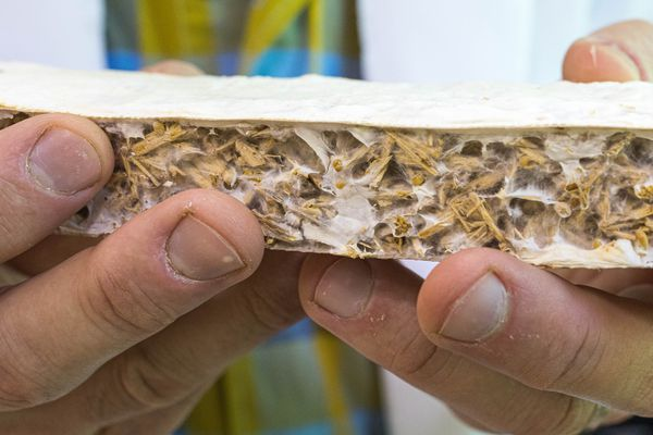 Dr. Philippe Amstislavski holds a sample of insulation made from fungi, in his lab at the University of Alaska Anchorage on June 21, 2019. Amstislavski testing different structures on which to grow the fungi, trying to find ones that are stronger and promote more insulating properties. (Loren Holmes / ADN)