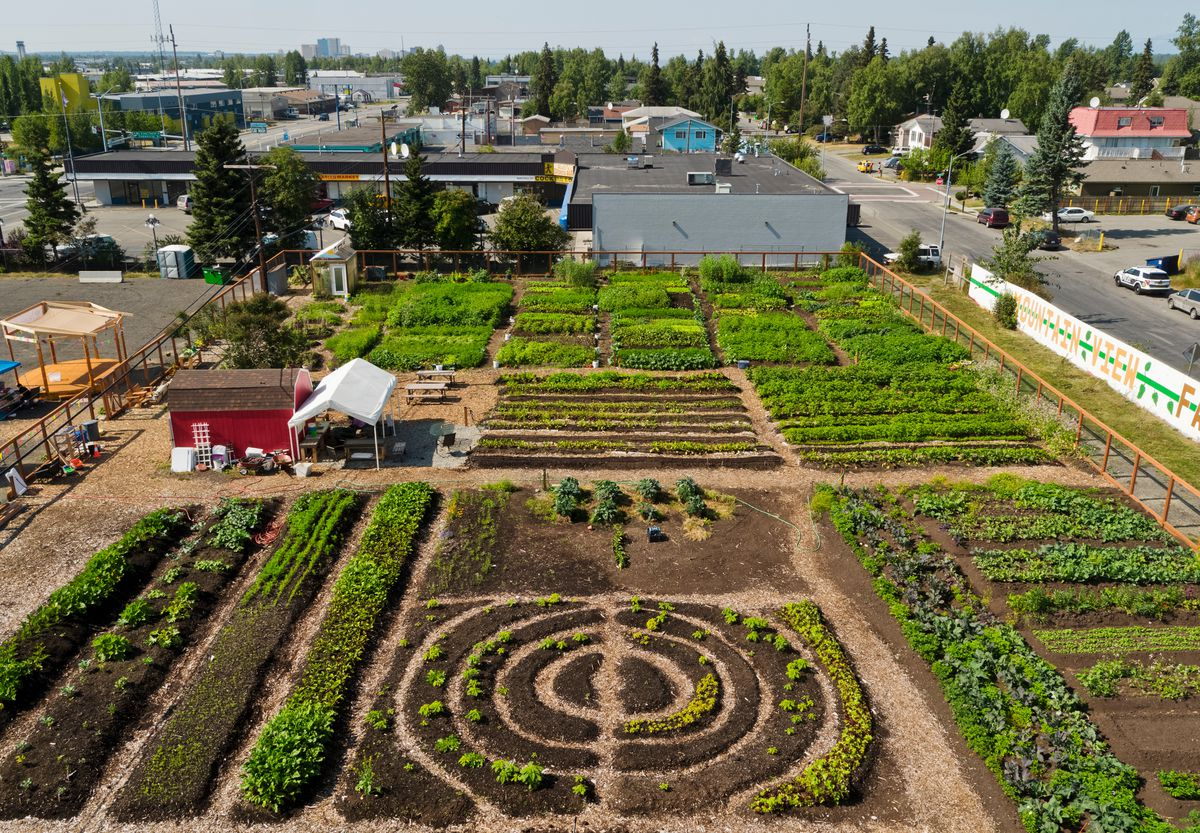 An aerial view of Grow North Farm shows its plots and rows on August 9, 2019. (Marc Lester / ADN)