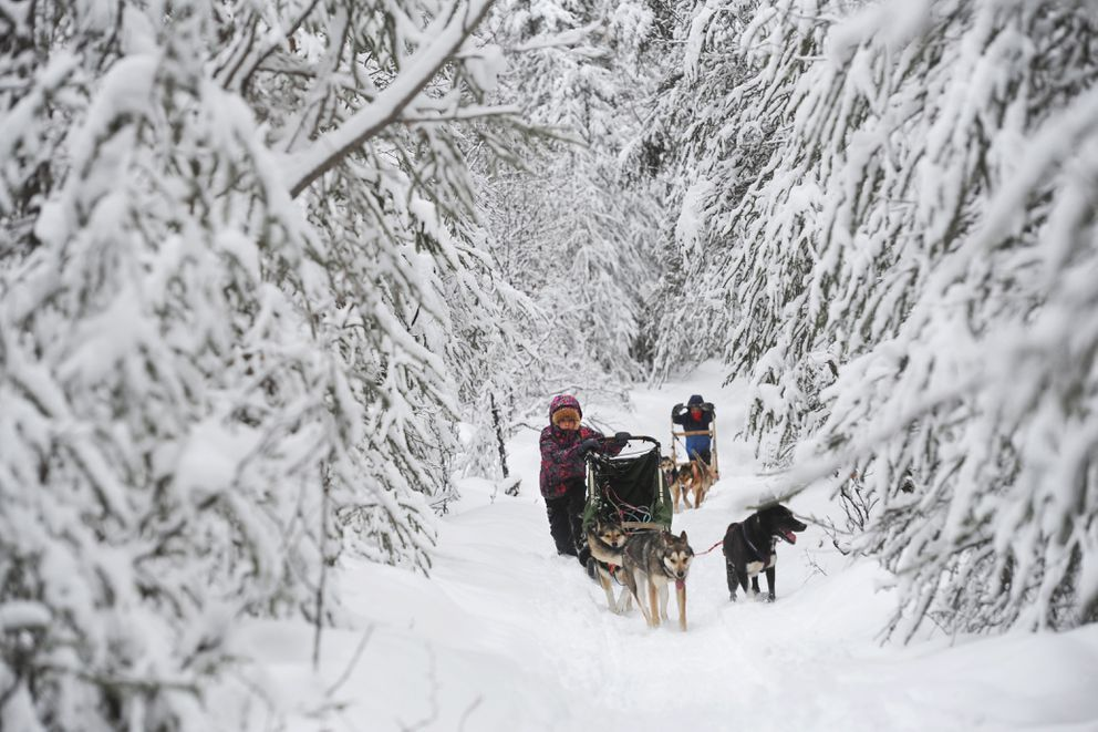 Ava Smyth, 10, and her brother Banyan, 6, run dogs along a five-mile course in the woods surrounding the family home near Houston. The going was a little slow following a spring snowfall. (Erik Hill / Alaska Dispatch News)