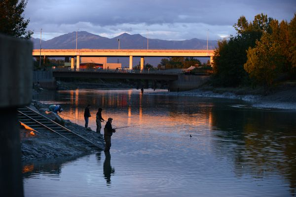 Anglers fish for Coho Salmon in the evening light at Ship Creek in downtown Anchorage, AK on Thursday, August 16, 2018. (Bob Hallinen / ADN)