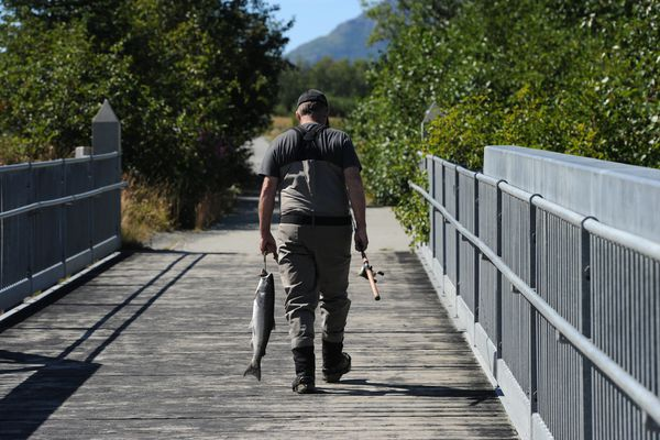 Jonathan Weaver walks back to the parking lot with a silver salmon that he caught while fishing the incoming tide on opening day at Bird Creek on Thursday, July 14, 2016. (Bill Roth / Alaska Dispatch News)