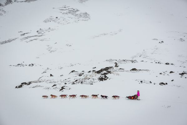 OPINION: Donlin Gold has shown high regard for the Iditarod Trail and traditional users in its plan for a gas pipeline to its mine site. Pictured: DeeDee Jonrowe drives her team over Rainy Pass during the the 2013 Iditarod race.