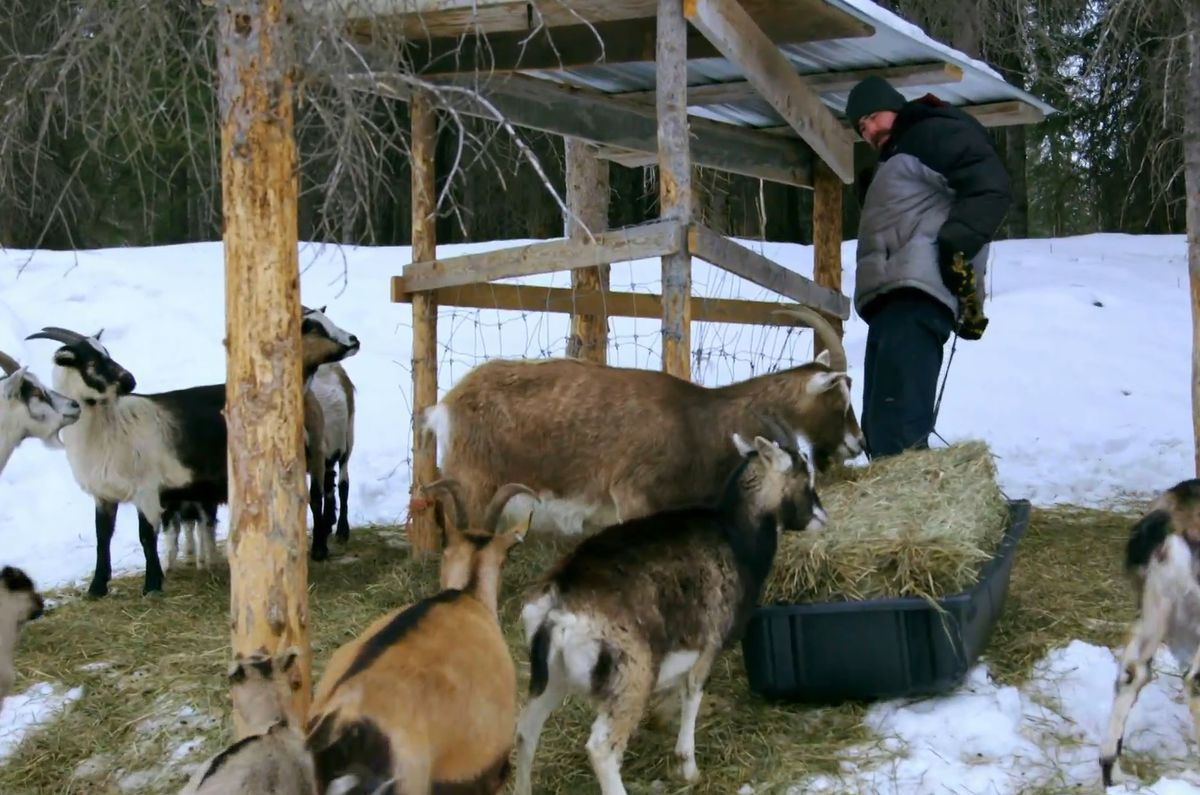 Jeremy Keller and his goats in McCarthy (Screen capture via Discovery)