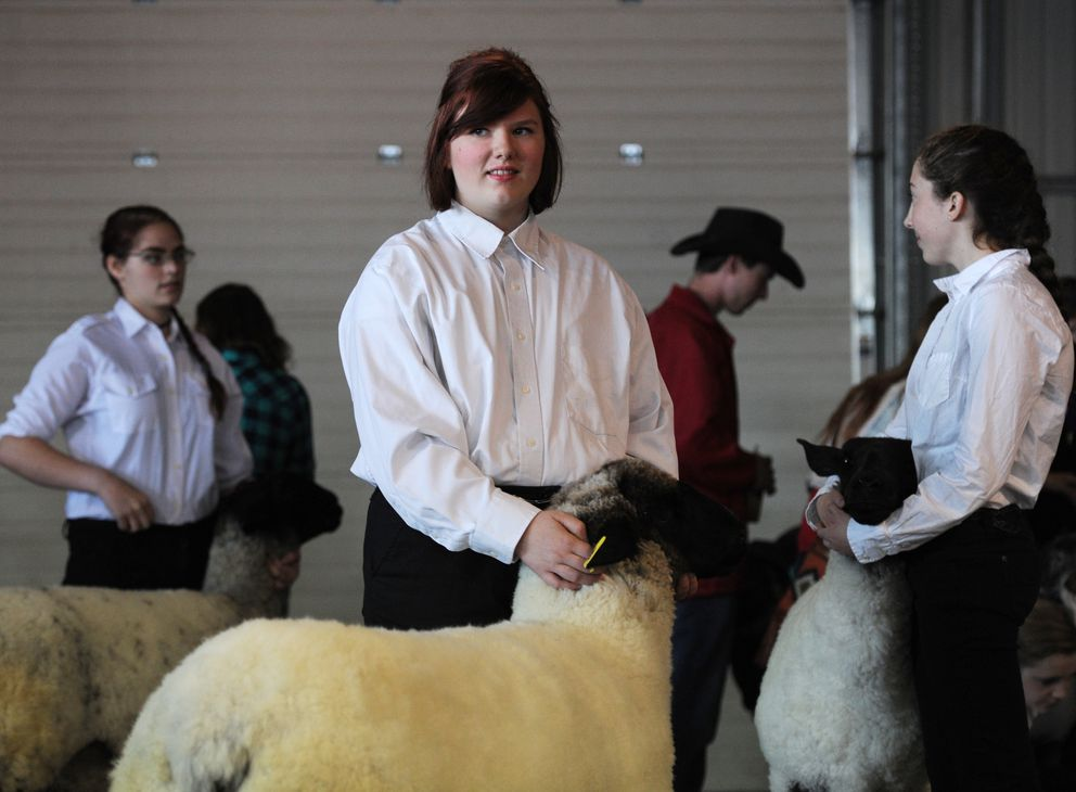 Haylee Snegirev of Palmer waits to compete in 4-H showmanship with her sheep McKinley at the 2016 Alaska State Fair. (Erik Hill / ADN archives)