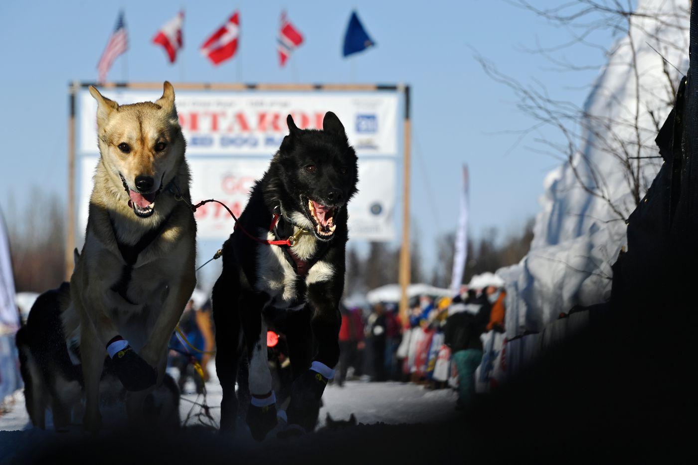 Aaron Burmeister's dogs run from the Iditarod starting area. (Marc Lester / ADN)