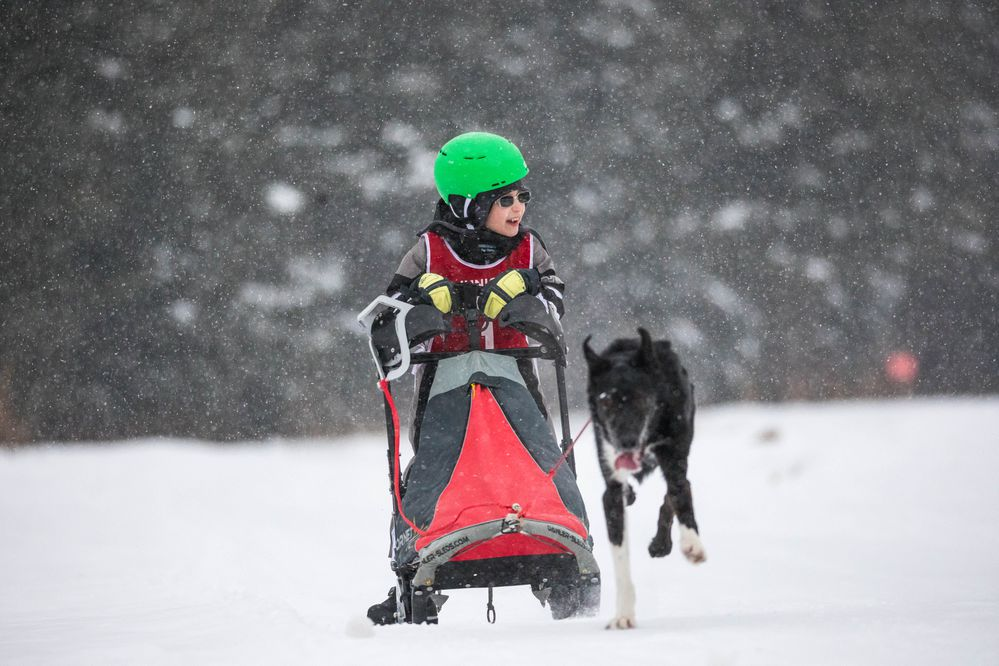 Joseph Wellmann races in the 1-dog class race Saturday, Feb. 16, 2019 during the Junior World Championship Sled Dog Race at Tozier Track. (Loren Holmes / ADN)