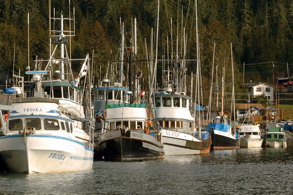 Undated photo of fishing boats in Wrangell harbor. (Jim Lavrakas / Alaska Dispatch News