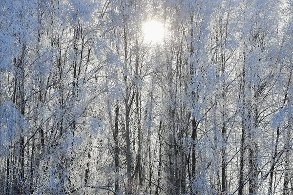 Sunlight seeps through hoar frost-covered trees in Williwaw Park on Monday, Feb. 8, 2021. (Emily Mesner / ADN)