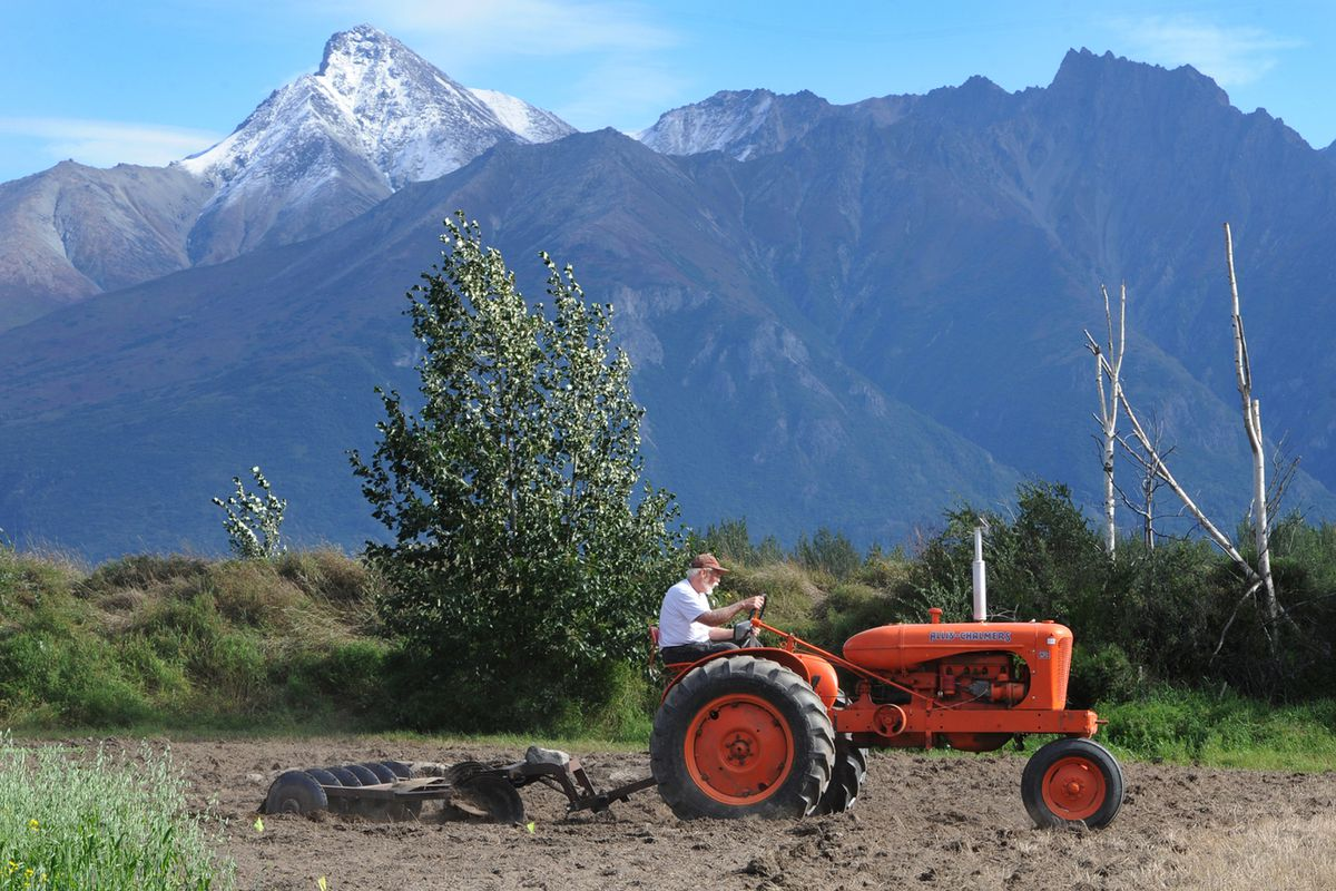 Richard Greeno , president of the Antique Power Club of Alaska, drives an old tractor as he plows the land during Harvest Fest on Sunday, Sept. 6, 2020. (Bill Roth / ADN)