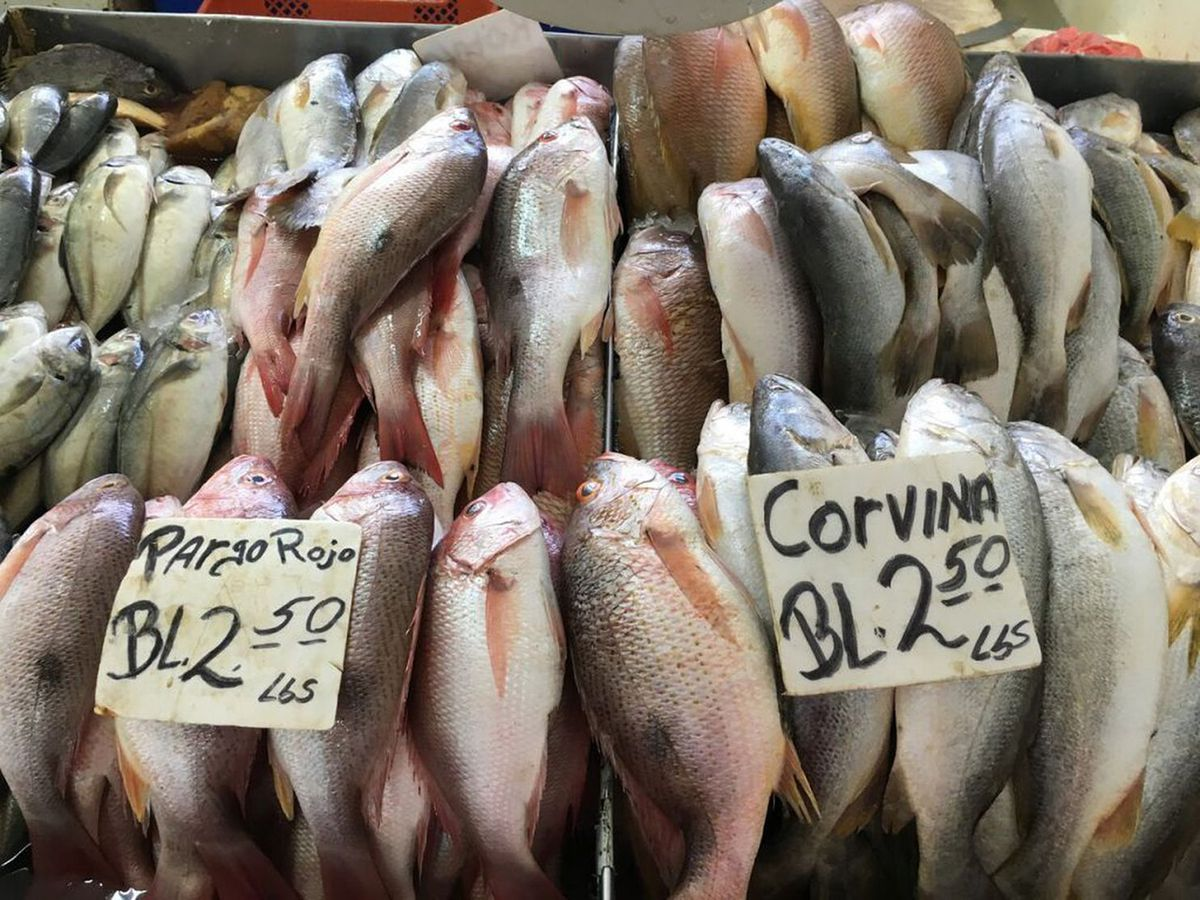 Red snapper and corvina drum at a fish market in Panama. (Smithsonian photo handout by Beth King)