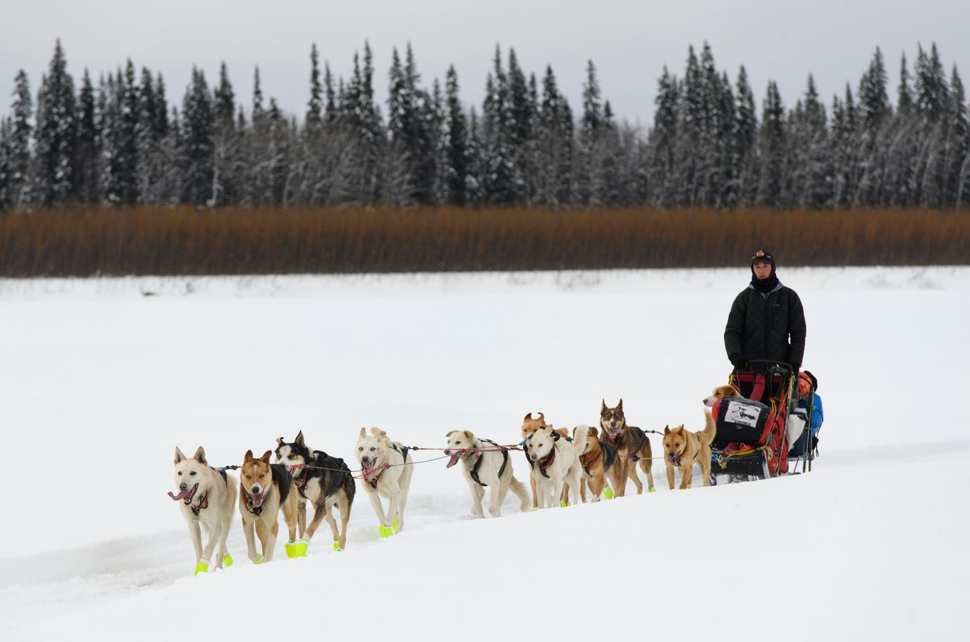 Matt Hall and his team reach Eagle Island during the Iditarod on March 9, 2019. (Marc Lester / ADN)