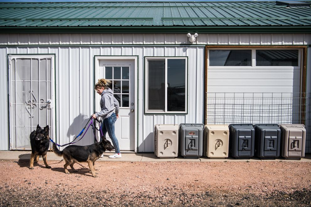 Dog care Team member Jolene Roper, 18, takes two German shepherds for a walk at the National Mill Dog Rescue in Peyton, Colo. (Washington Post photo by Salwan Georges)