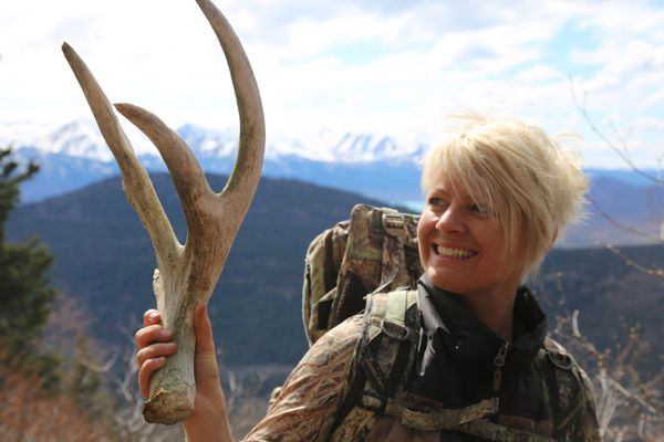 Christine Cunningham holds a moose antler that has been chewed on by a porcupine after finding it in the mountains in early May. (Steve Meyer)