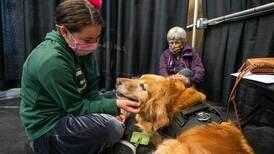 Meet Grover, a golden retriever bringing calm to Alaskans anxious about their COVID-19 vaccination