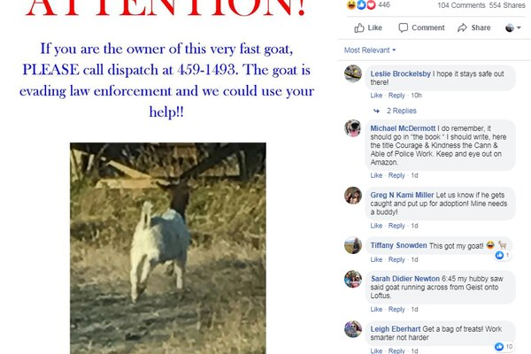 Fairbanks North Star Borough Animal Control officers were on the lookout for a goat first reported missing Monday, Oct. 14, 2019, and sought help from the public in this widely shared Facebook post. (Fairbanks North Star Borough Animal Control on Facebook)