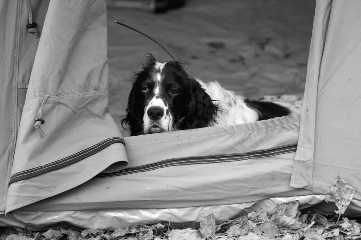 Colt establishes early ownership of the tent. (Photo by Steve Meyer)
