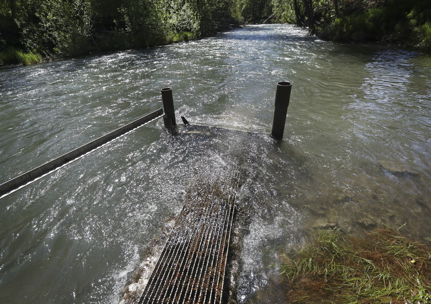 A fish ladder extends into Ship Creek as thousands of king salmon smolt run through it and into the water. (Emily Mesner / ADN)