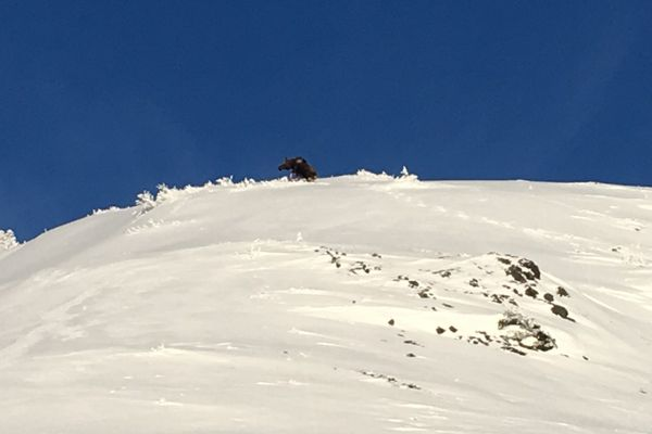 An image accompanied a Sunday avalanche report from the Lower Arkose ridge in Hatcher Pass by an observer who said the slide was triggered by a cow moose. (From HPAC)