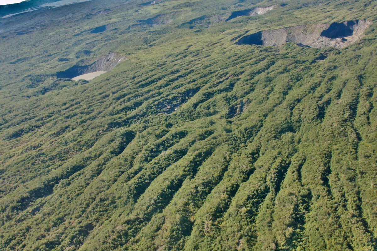A forest grows over the crevasses of Alaska's Bering Glacier. (Martin Truffer)