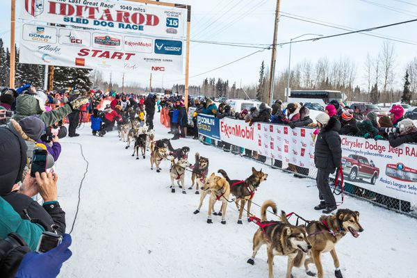 2014 Iditarod champion Dallas Seavey gets ready to start the 2015 race on Dale Road in Faribanks on on Monday, March 9, 2015. The 1,000-mile race normally starts near Anchorage but was forced north due to unusually warm weather and a lack of snow. (Loren Holmes / Alaska Dispatch News)