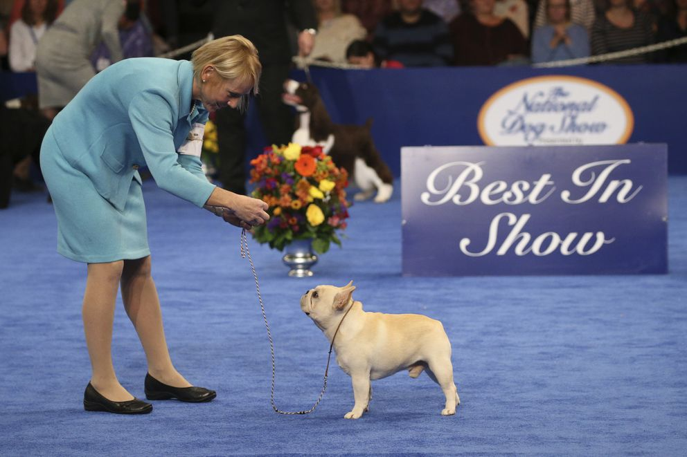 French bulldog Babe was the Non-Sporting Group winner. (Bill McCay, NBC)