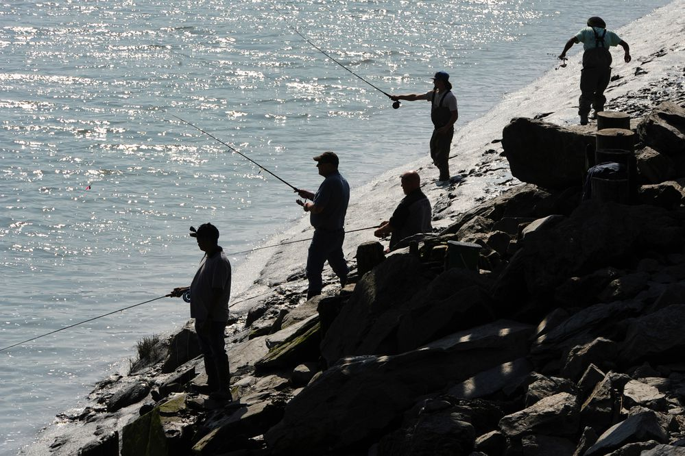 Fishermen try their luck fishing for coho salmon during an incoming tide at Bird Creek on Sunday, Aug. 11, 2019. (Bill Roth / ADN)