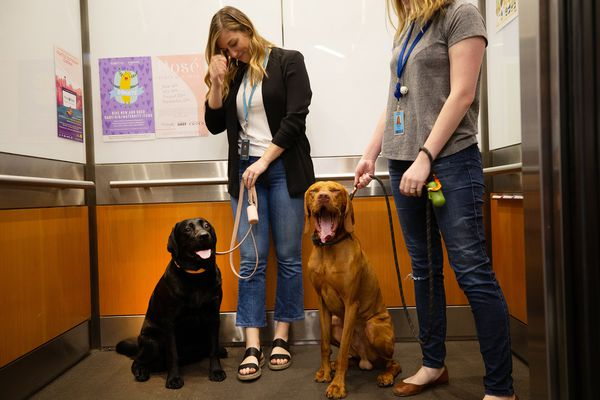 Lauren Lee, left, and Agata Skora with their dogs, Emmy and Manu, head up the elevator for a day of work with their owners at Amazon in Seattle on June 11, 2019. (Karen Ducey/Los Angeles Times/TNS)