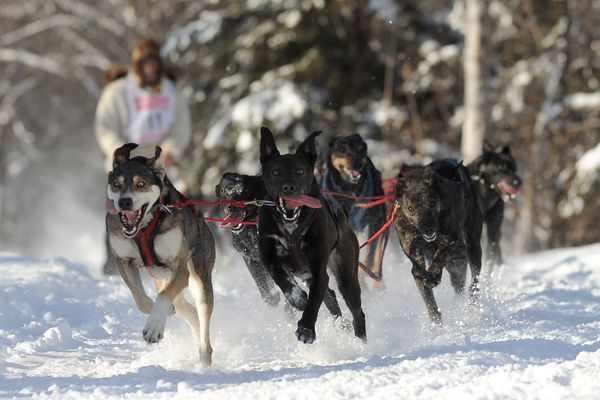 Bill Kornmuller drives his dog team down the Chester Creek Trail during the first day of the 2018 Fur Rendezvous Open World Championship Sled Dog Race in Anchorage, AK on Friday, Feb. 23, 2018. (Bob Hallinen / ADN)