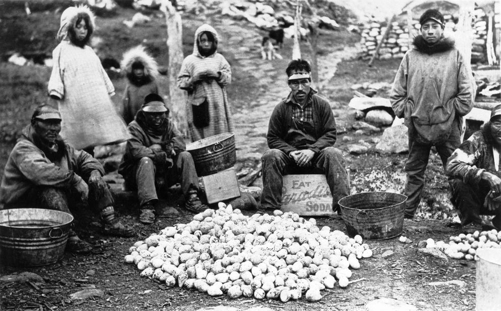 "Men and children looking over murre eggs.""Menadelook: An Inupiat Teacher's Photographs of Alaska village Life, 1907-1932″"