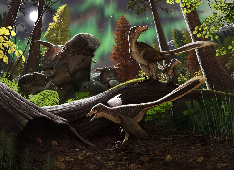 Artistic rendering of a juvenile dromaeosaur 70 million years ago on the Prince Creek Formation in northern Alaska. (Andrey Atuchin/Southern Methodist Univeristy)