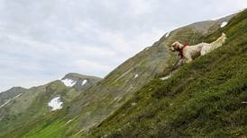 A hike gets tense when a dog runs out of sight — and ends with a sloppy kiss and a renewed respect for nature