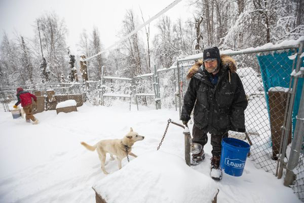 Iditarod musher Jim Lanier tends to his dogs at his kennel Thursday, Feb. 22, 2018 in Chugiak. Lanier, 77, will be the oldest musher in the Iditarod Trail Sled Dog Race this year. (Loren Holmes / ADN)